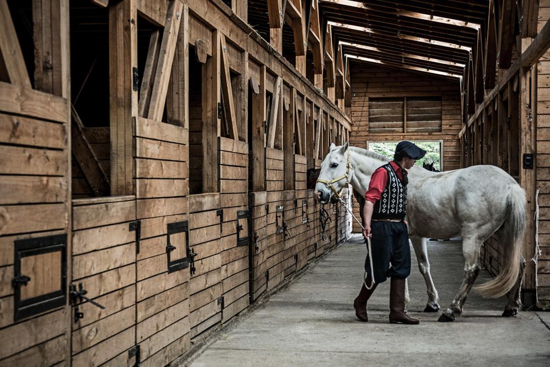 اسب در مجارستان