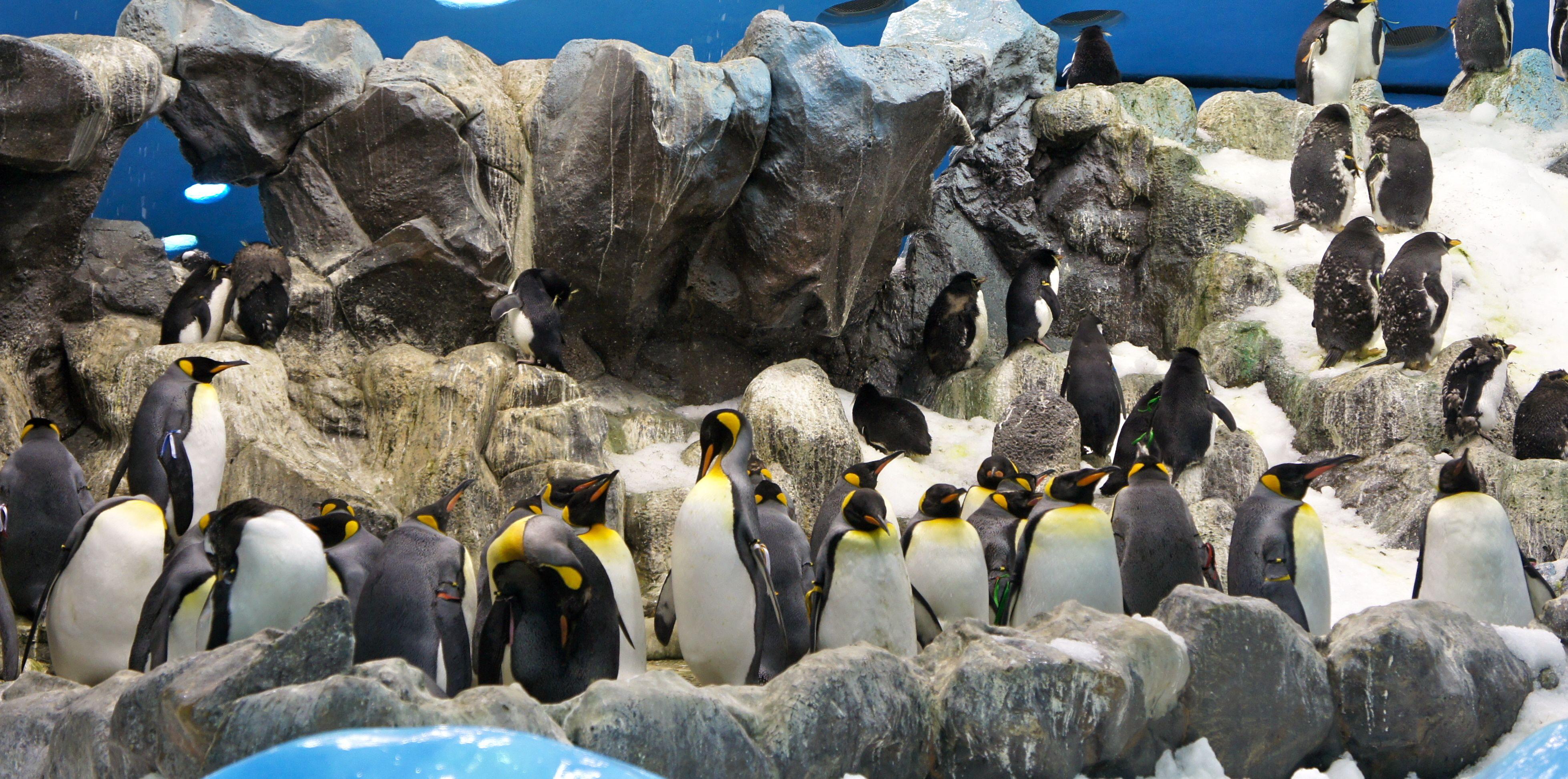 باغ وحش لورو پارک