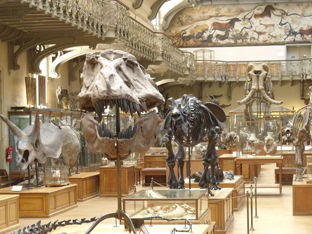 موزه تاریخ طبیعی سوئیس
