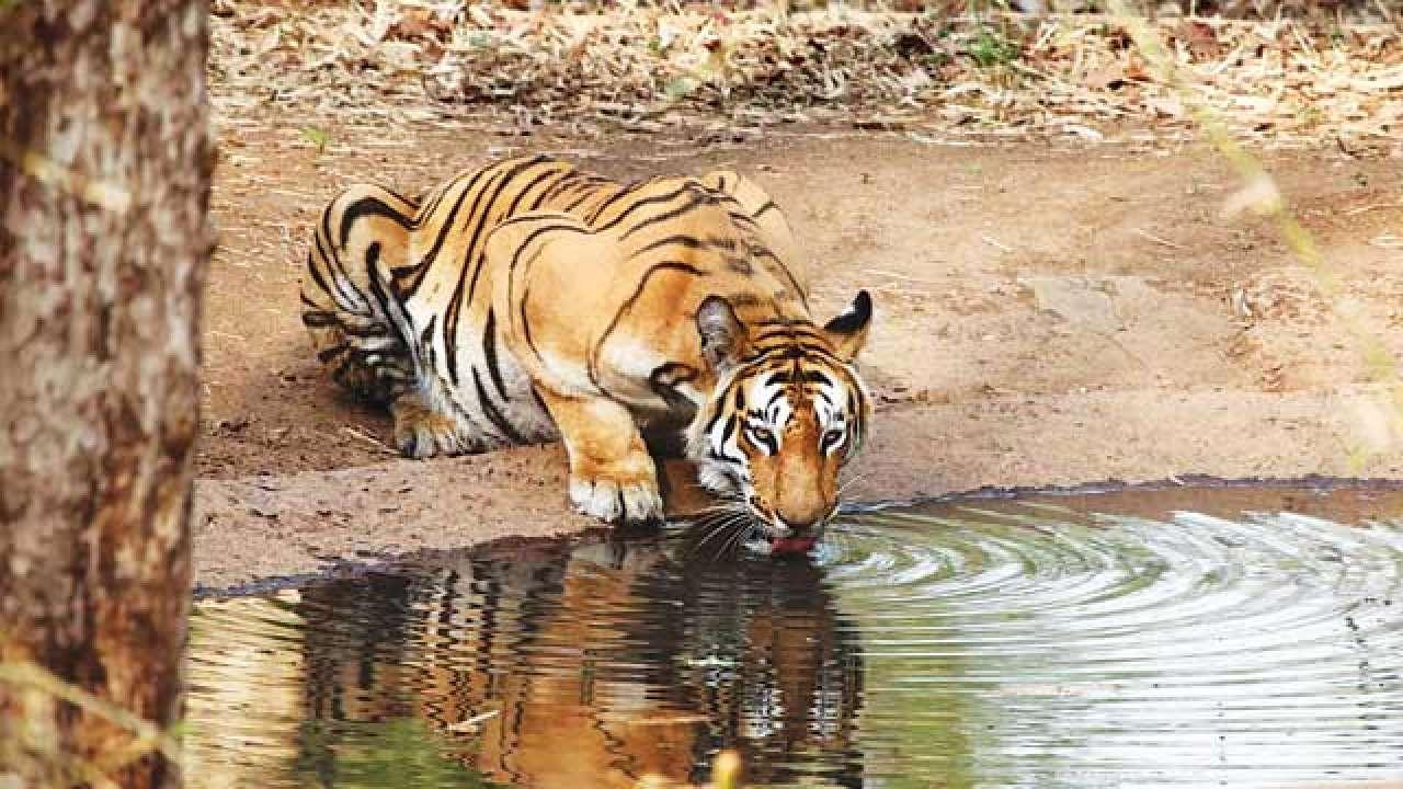 Sahyadri Tiger Reserve