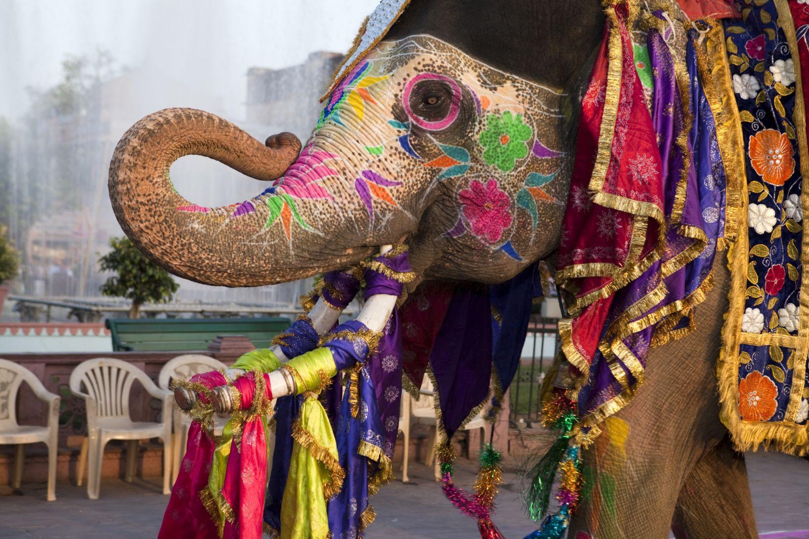 جشن فیل ها