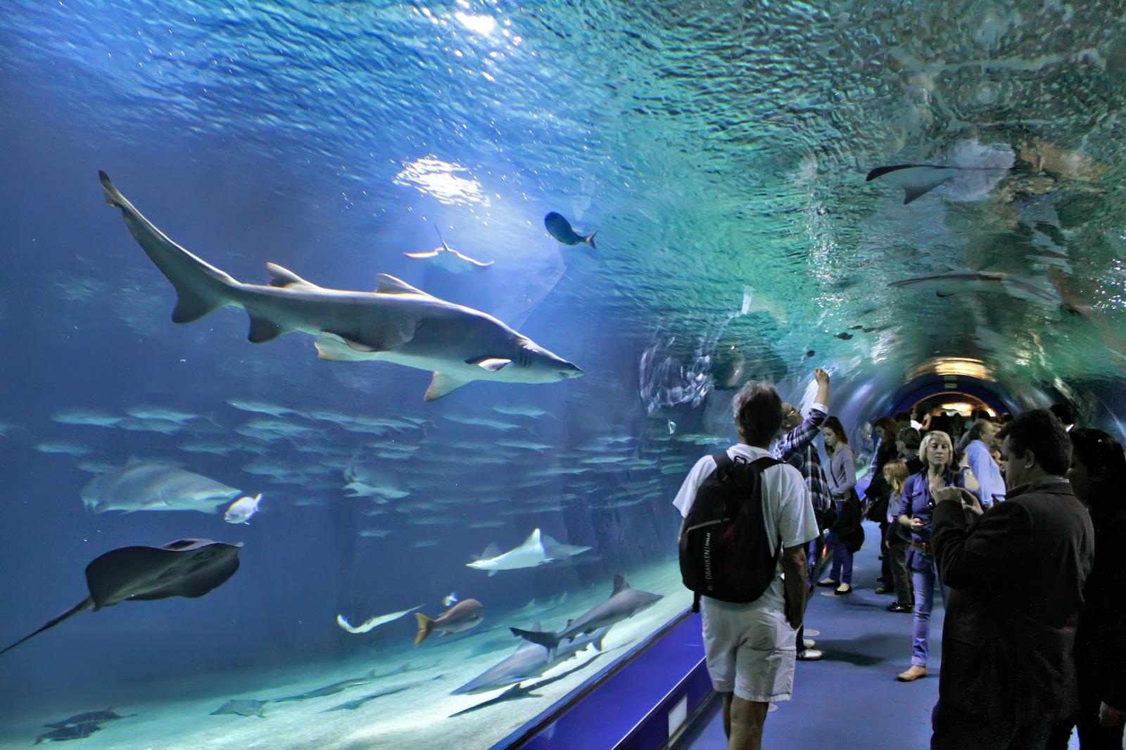 اقیانوس شناسی والنسیا