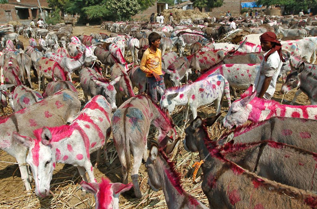 Donkey Fair