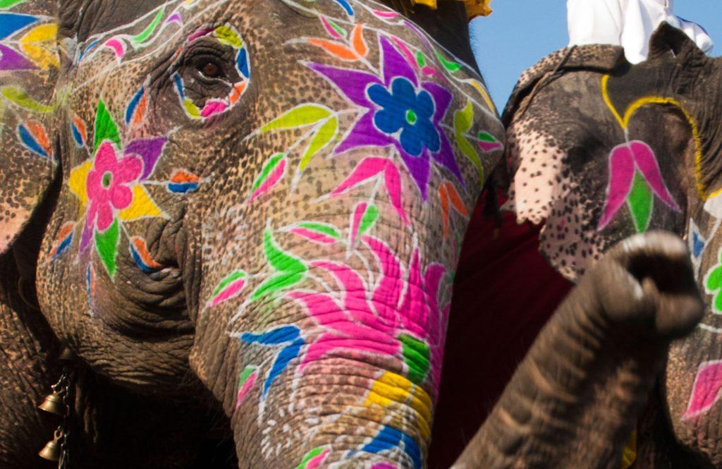 رنگ کردن فیل ها
