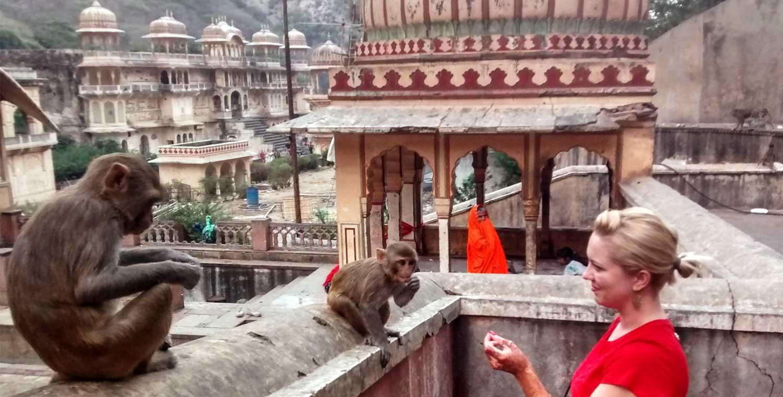 معبد میمون ها