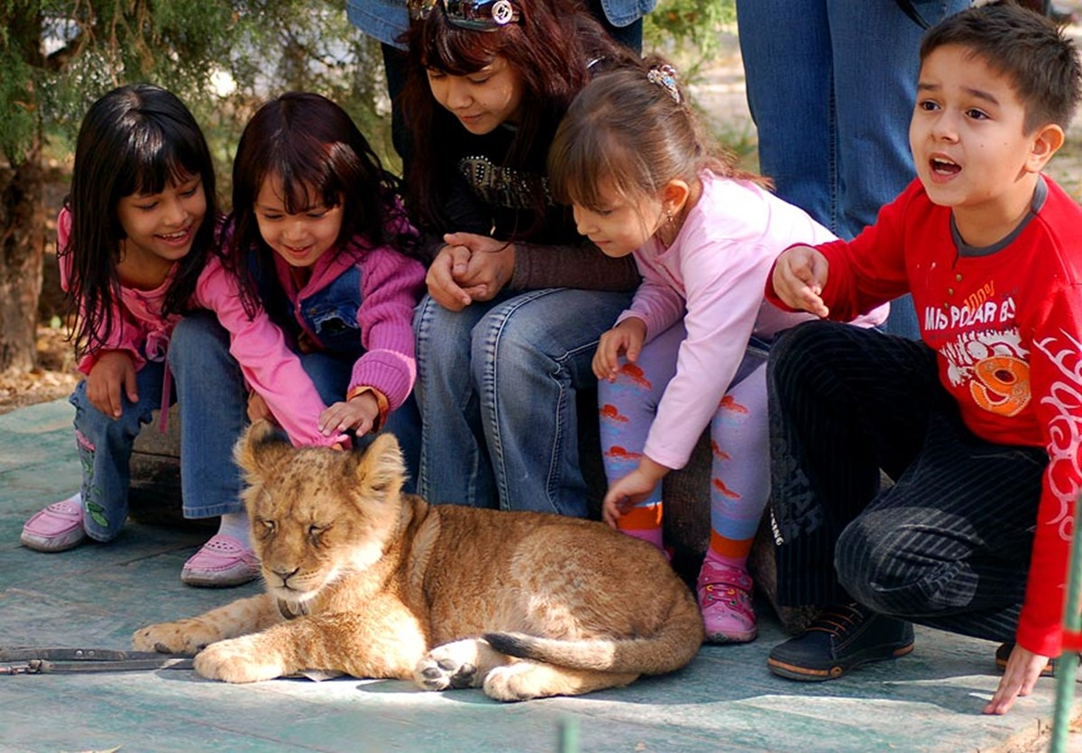 The lion park