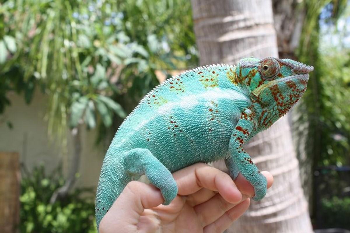 Le Bonheur Reptiles and Adventures