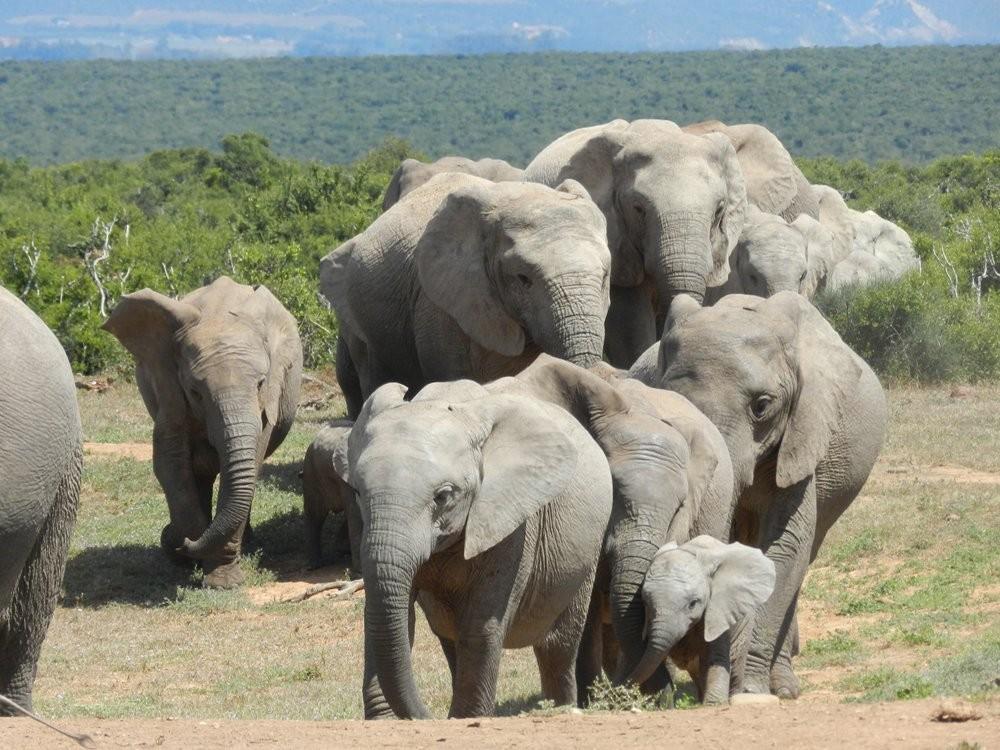 پارک ملی فیل ها