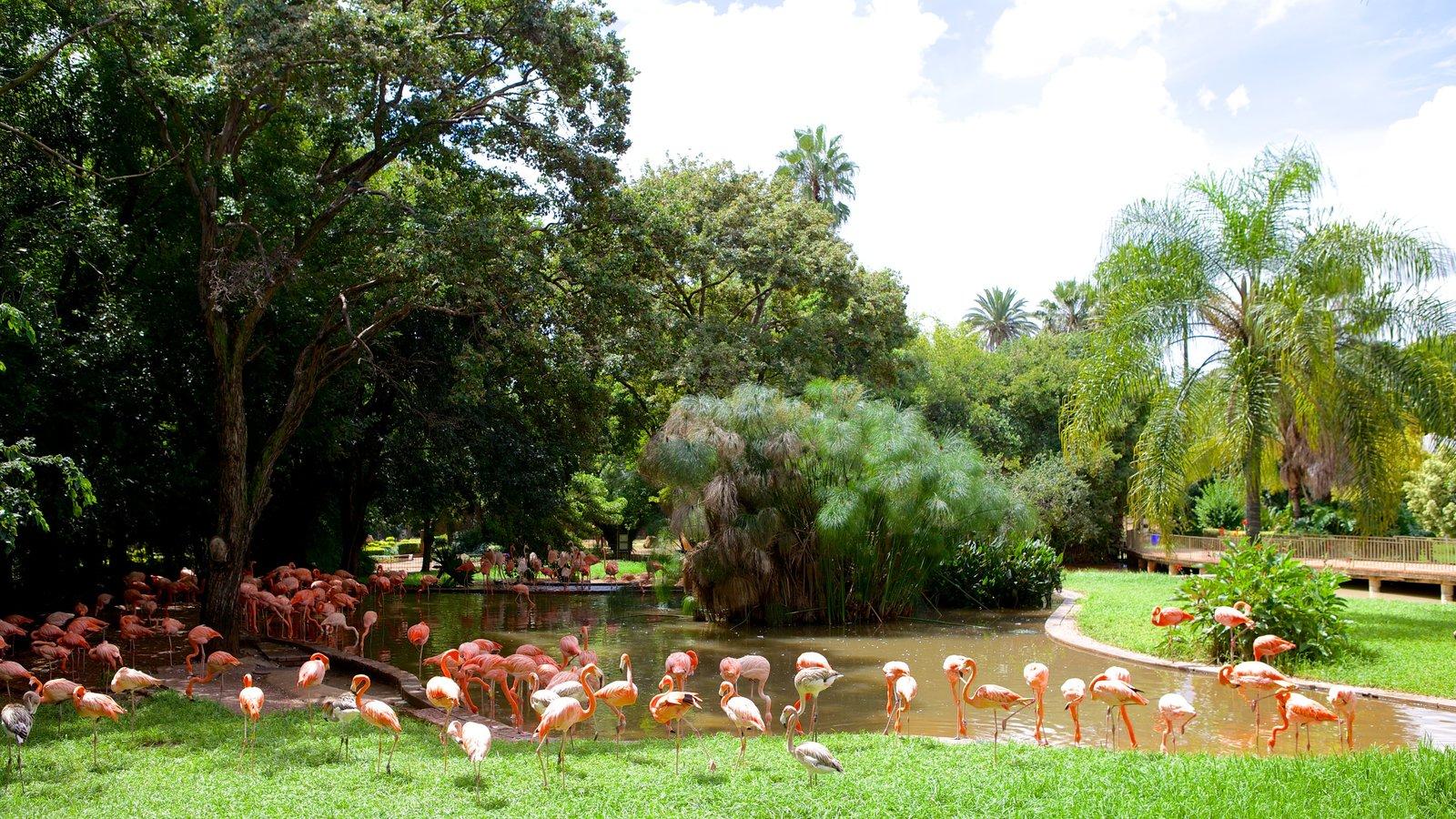 پارک بازی کراگا کاما
