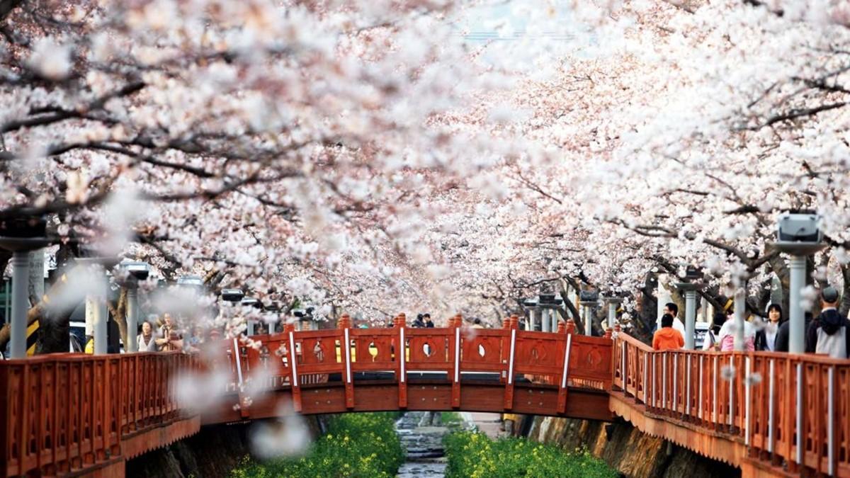 hiseoul spring festival