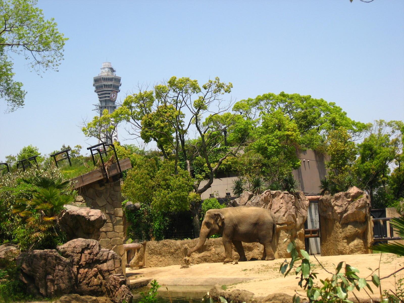 باغ وحش تنوجی