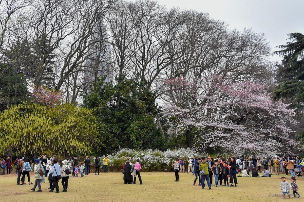 پارک شینجوکو گیوئن