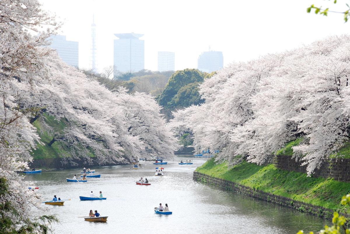 دریاچه ی شینوبازو (Shinobazu Pond)