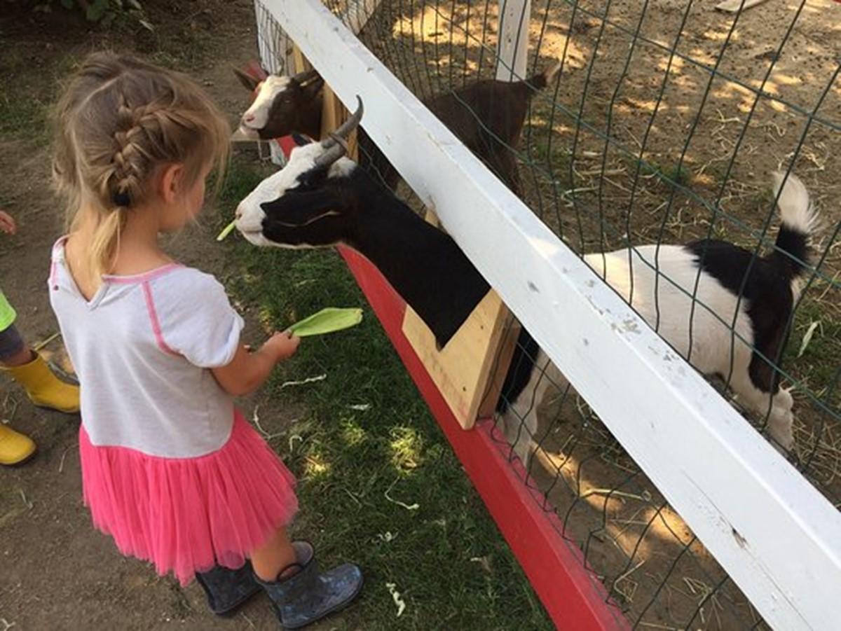 مزرعه ی دان-او-رِی
