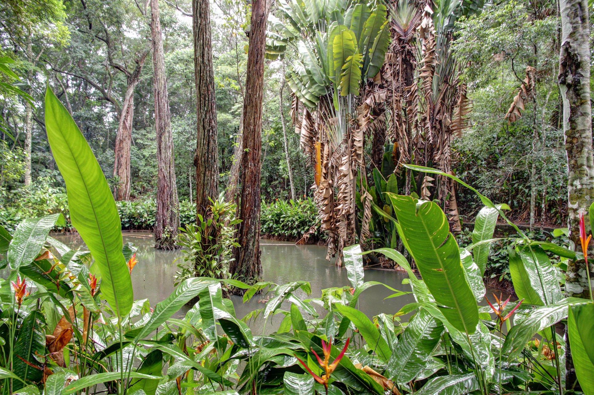 پارک ملی تیجوکا