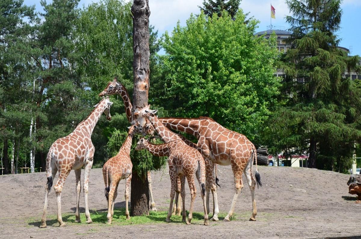 باغ جانورشناسی فرانکفورت