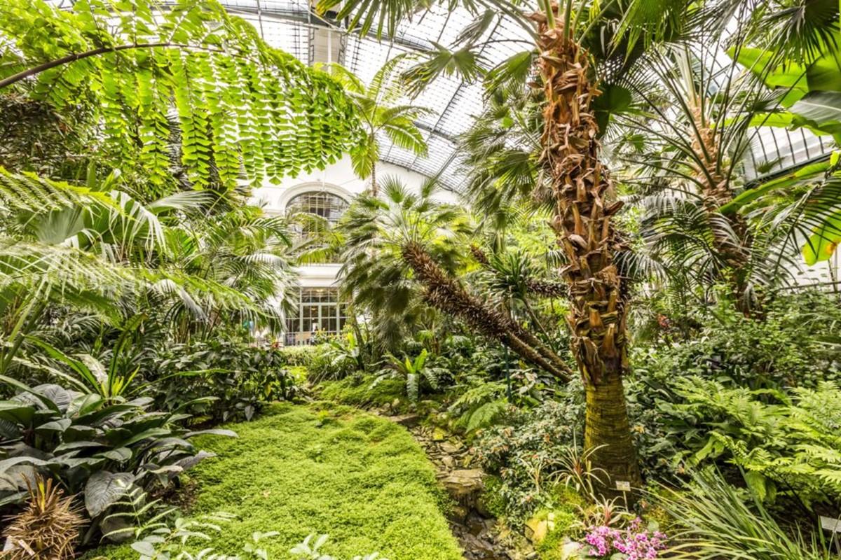 باغ گیاهشناسی پالمنگارتن