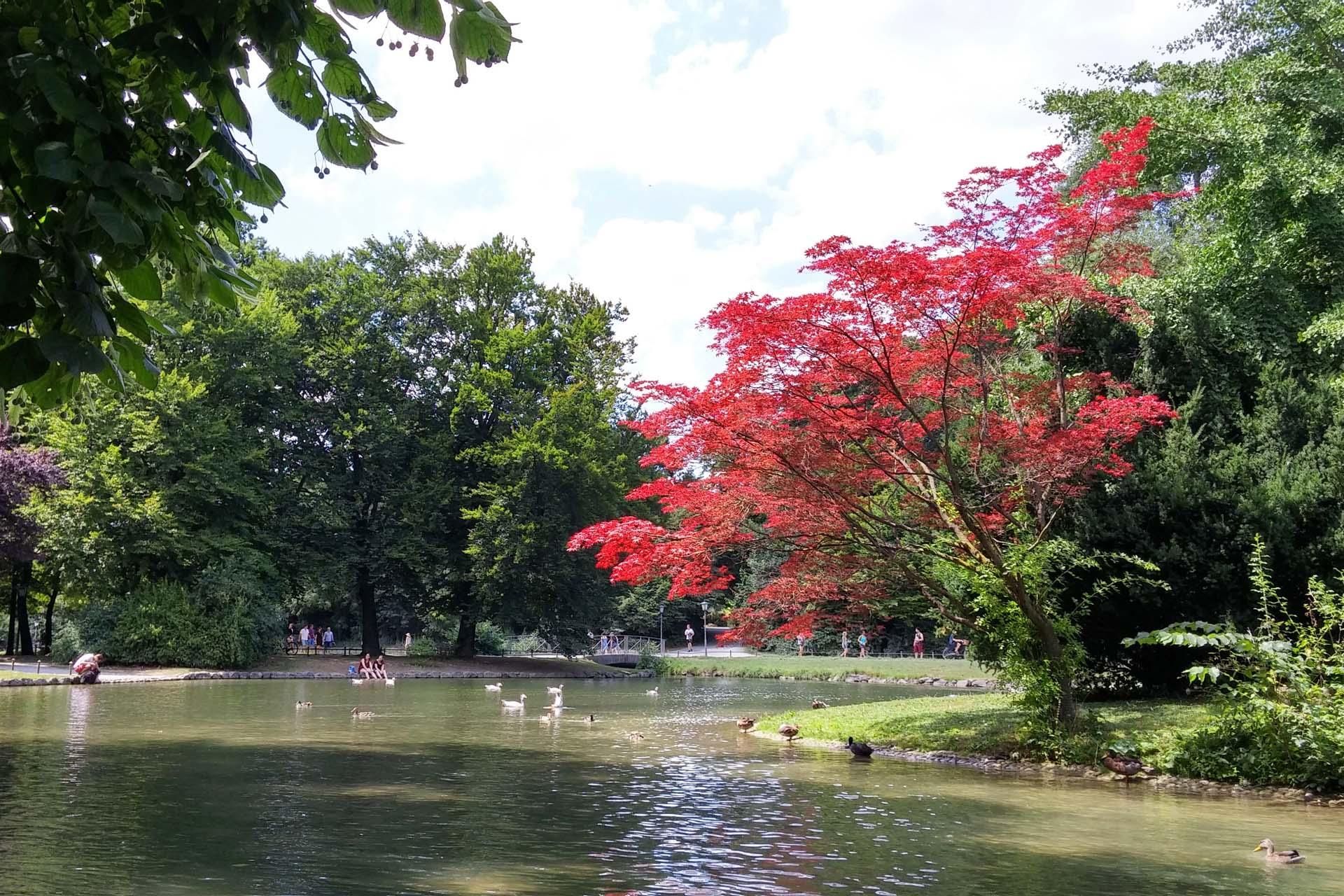 باغ انگلیسی مونیخ