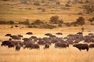 Masai Mra