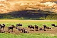 نگورونگورو و قبیله ی ماسای